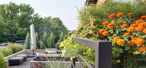Denver Colorado Landscape Services