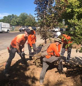Careers at Green Fuse landscape Denver Colorado
